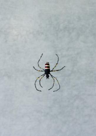 L`araignée au bout de son fil de sécurité