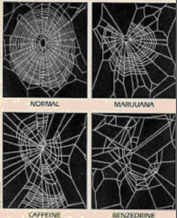 Toiles tissées après que l`araignées est été droguée